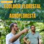 Curso Ecologia Florestal e Agrofloresta Dr. Walter Steenbock É Bom Vale a Pena?